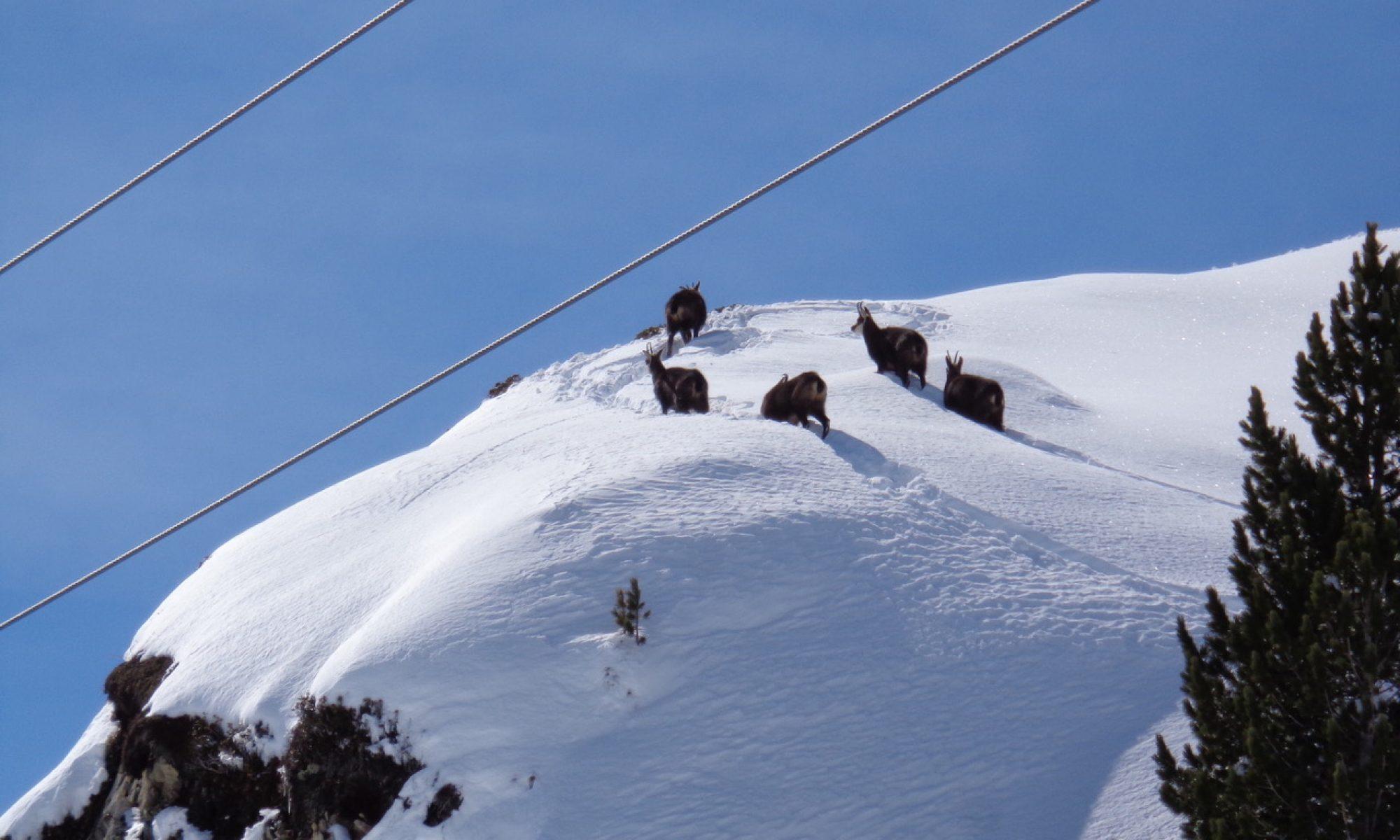 6. Alpenseminar